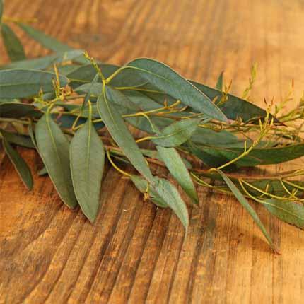 Actif : Eucalyptus - Gel Rafraîchissant pour les Jambes
