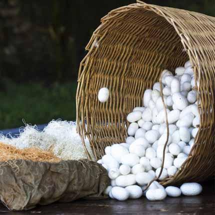 Actif : Protéine de soie - Nutri Clean Formule Nourrissante
