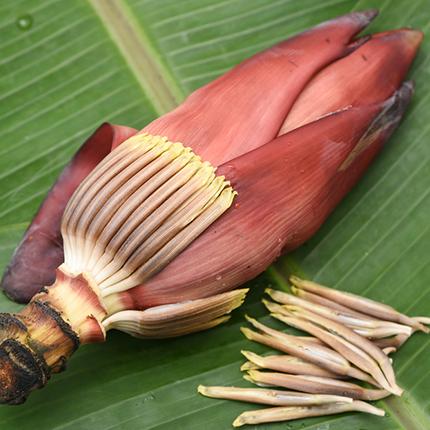 Actif : Fleur de banane - Crème Nettoyante