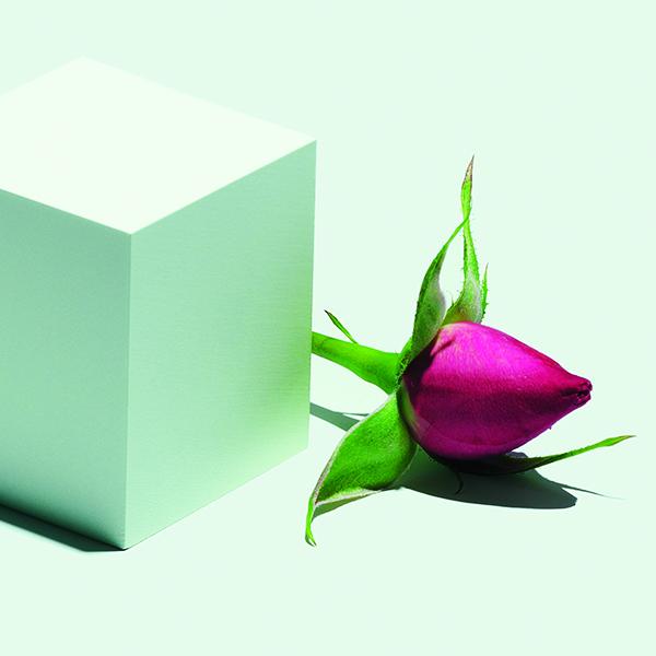 Actif : Rose - Élixir Antioxydant à la Rose