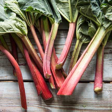 Actif : Rhubarbe - Specific Digest